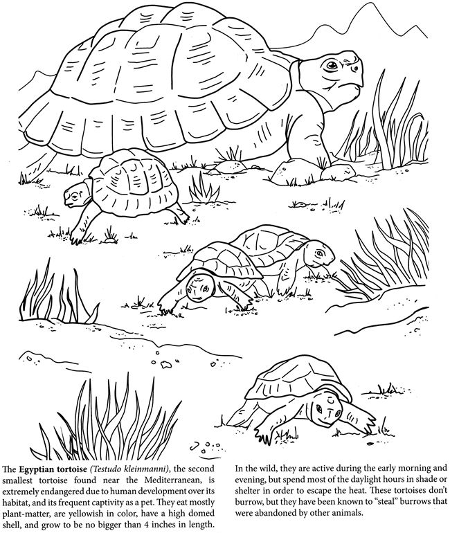 The World Of Turtles Dover Publications Disney Coloring Pages