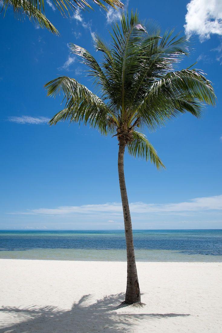 Smathers Beach Key West Key West In 2019 Key West