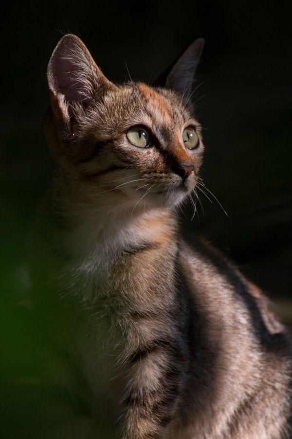 "landerscape: ""Cat by Chew Guat Choon on 500px.com """