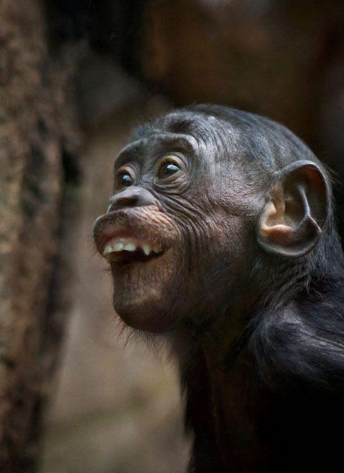 Инструменты, очень смешные картинки с обезьянами