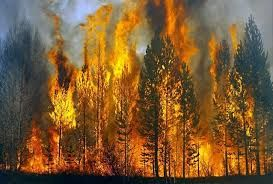 Image Result For Burning Forest With Images Wild Fire Planet