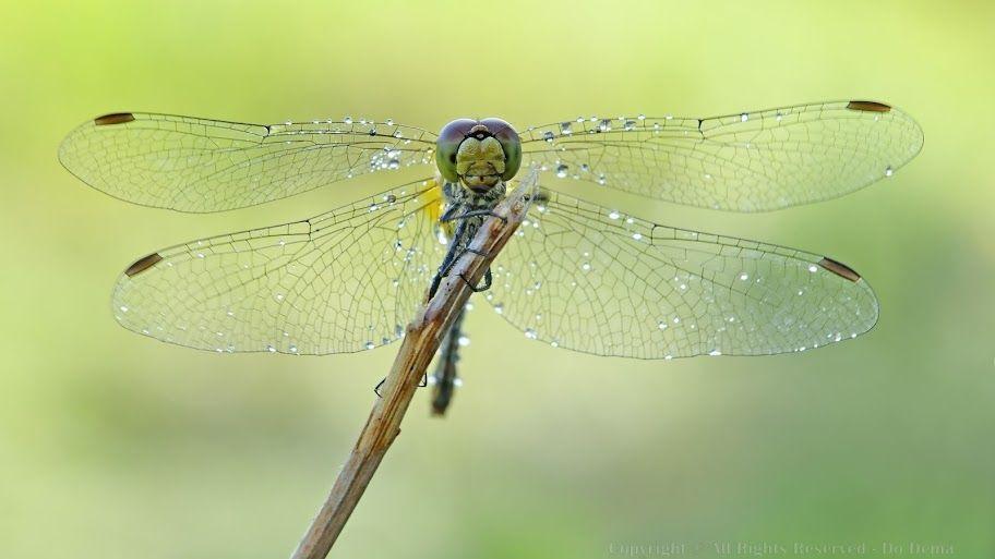 buTTerflies - Max Do Dema - Picasa Web Albums
