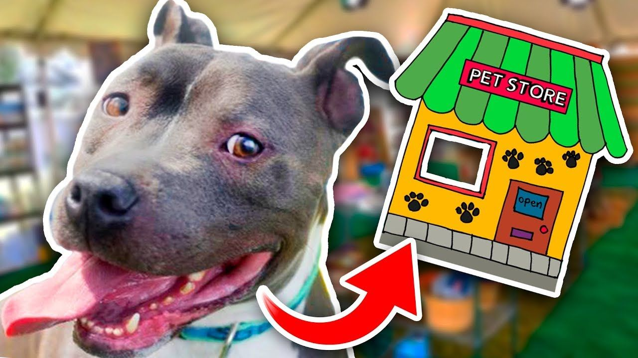 Buying A Homeless Dog An Entire Pet Store Youtube With Images