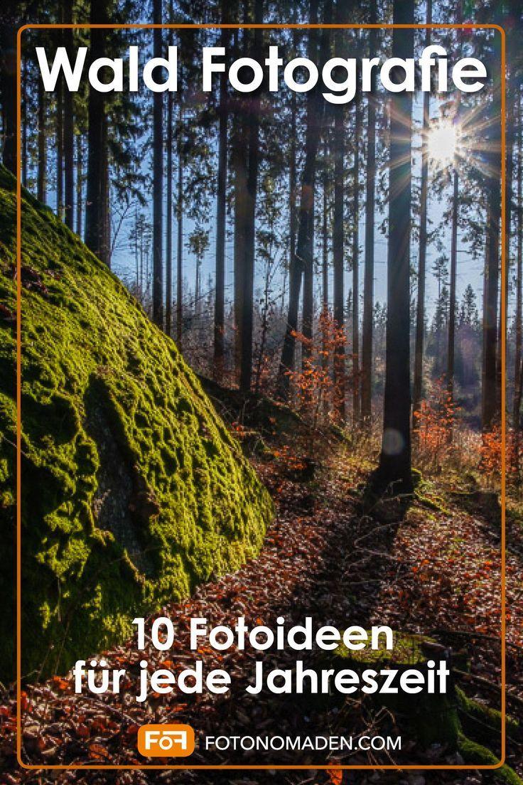 Wald Fotografie - 33 Fotoideen für Winter, Frühling, Sommer und Herbst