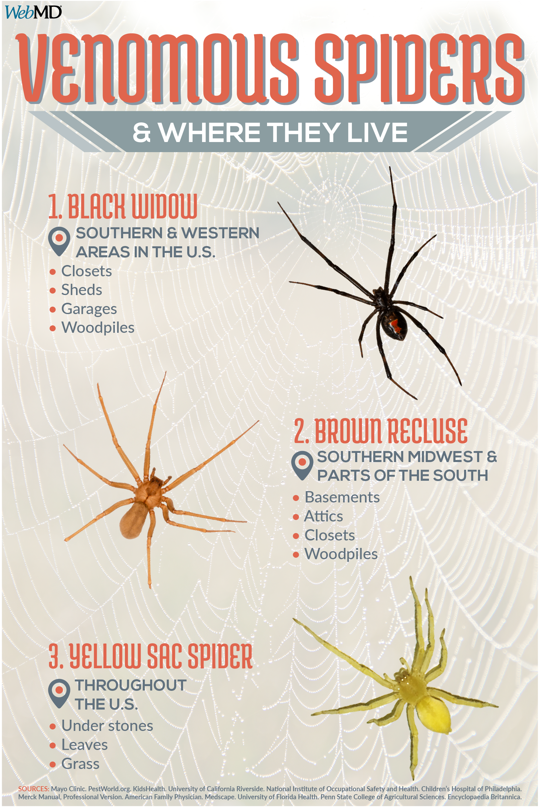 Slideshow What You Should Know About Spider Bites Spider Bites Brown Recluse Spider Spider