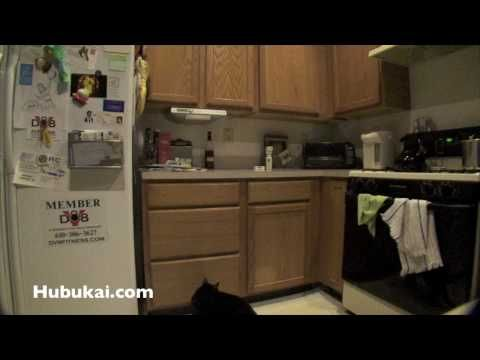 How To Keep Cats Off Counters Funny Cat Videos Cat Urine Smells