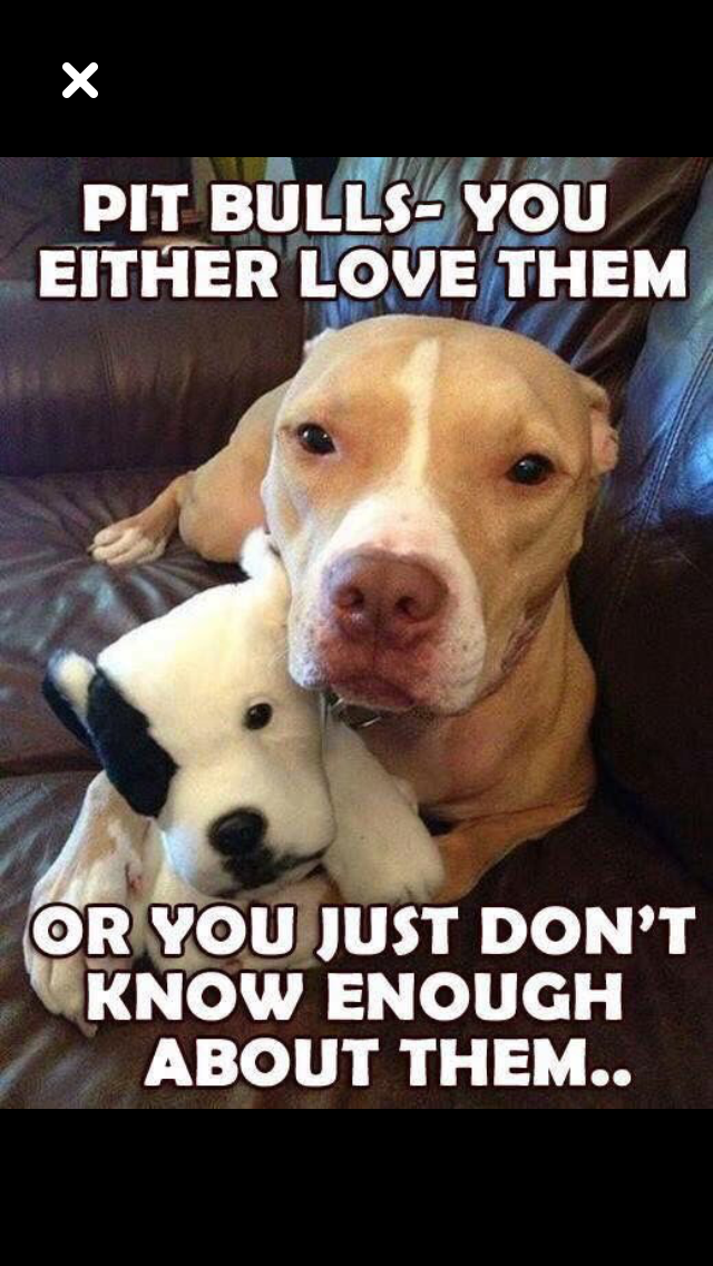 Pin By Pattie Paine On Precious Pitties Cute Animals Cute Dogs Animals