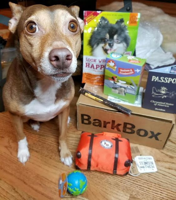 Barkbox January 2017 Small Dog Box Review And Free Box Offer Dog
