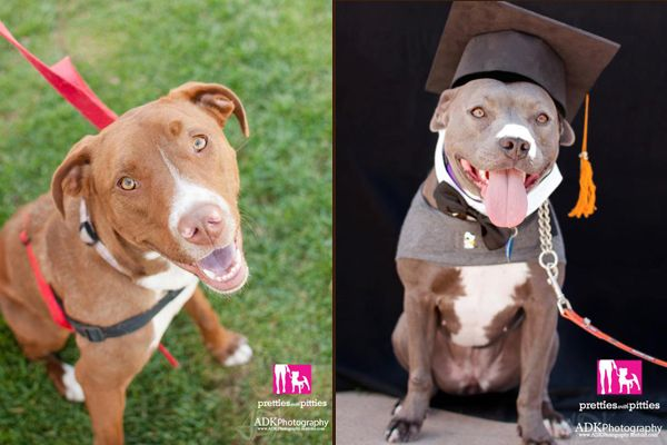 CGC Pretty in Pink Pretties with Pitties adds a program to help ...