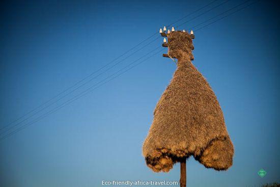 Sociable weavers nest, Northern Cape