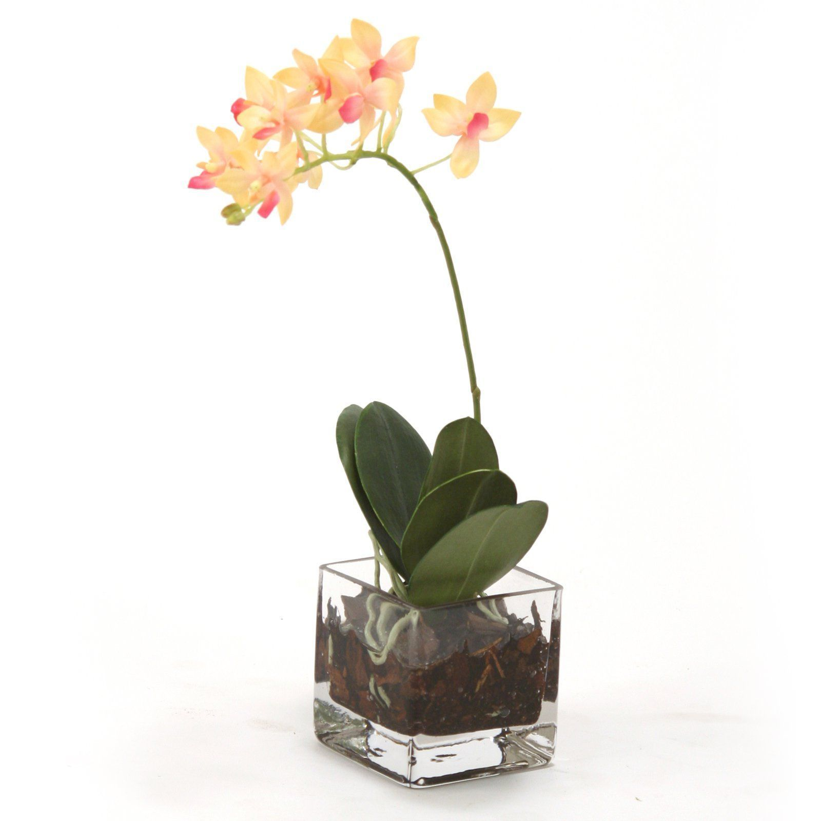 Distinctive Designs Waterlook Mini Silk Phalaenopsis Orchid  Set Of