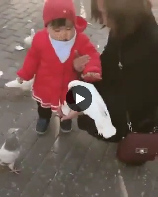 Baby And Pigeons In Italian Tourism - FUNNY 9GAG LOL LMAO ...
