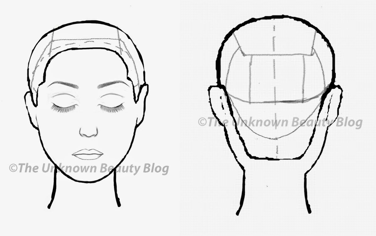 diagram of head for showing haircuts