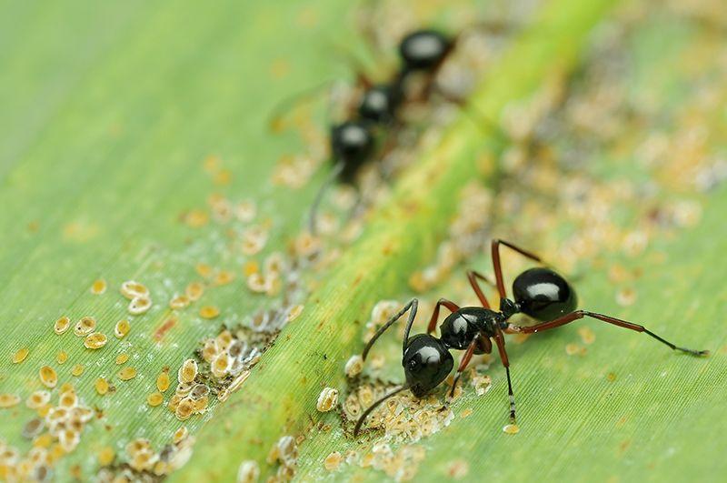 Lutter Contre Les Fourmis Insects Sis