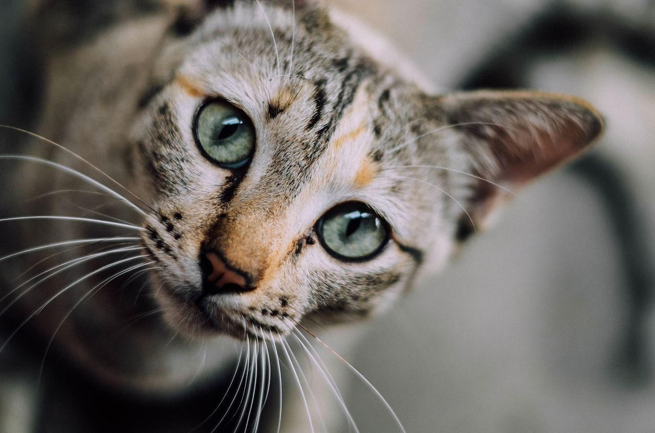 fotky zdarma krásné kočičky