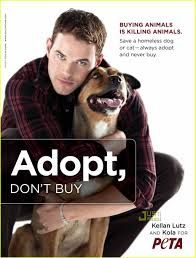 Adopt don´t buy !