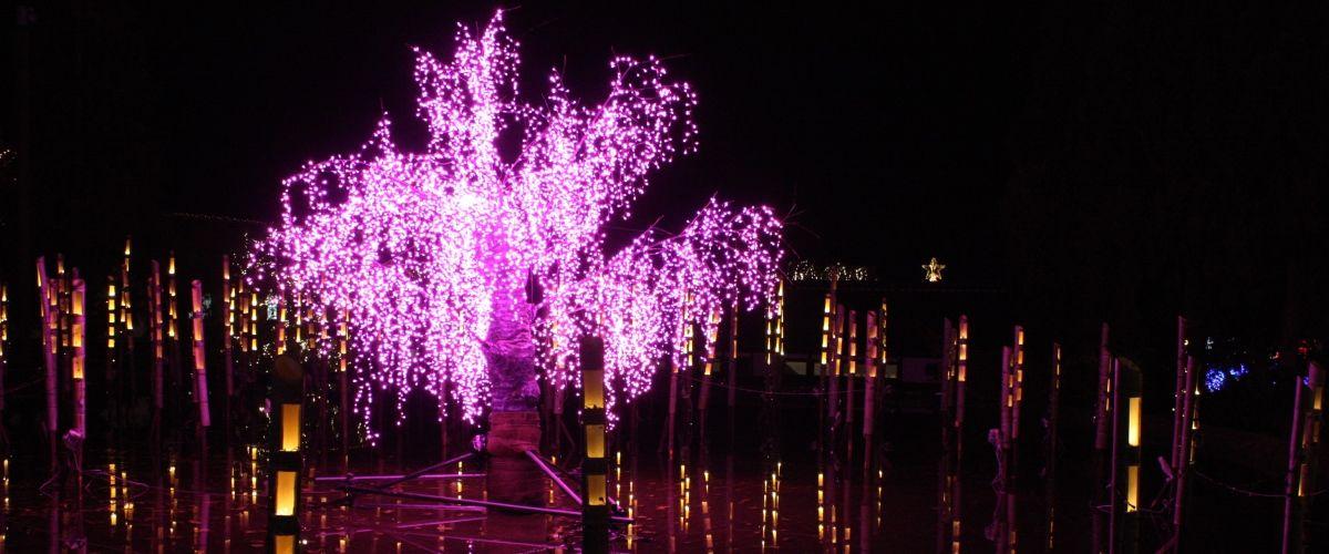 トップ|国営備北丘陵公園 Winter Illumination