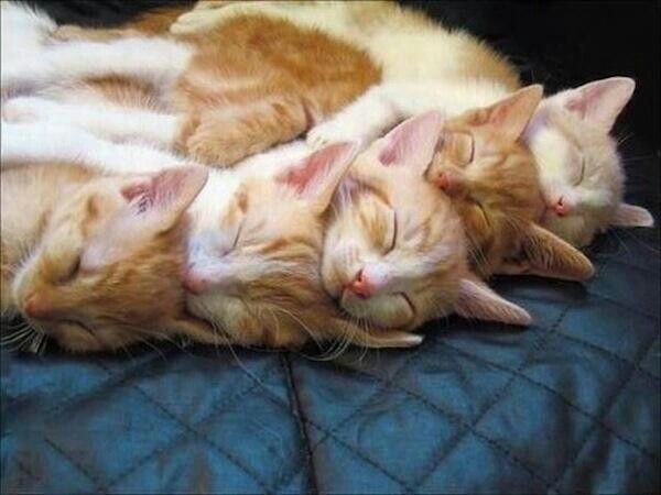 Orangey Goodness Kittens Cutest Cute Animals Cats And Kittens
