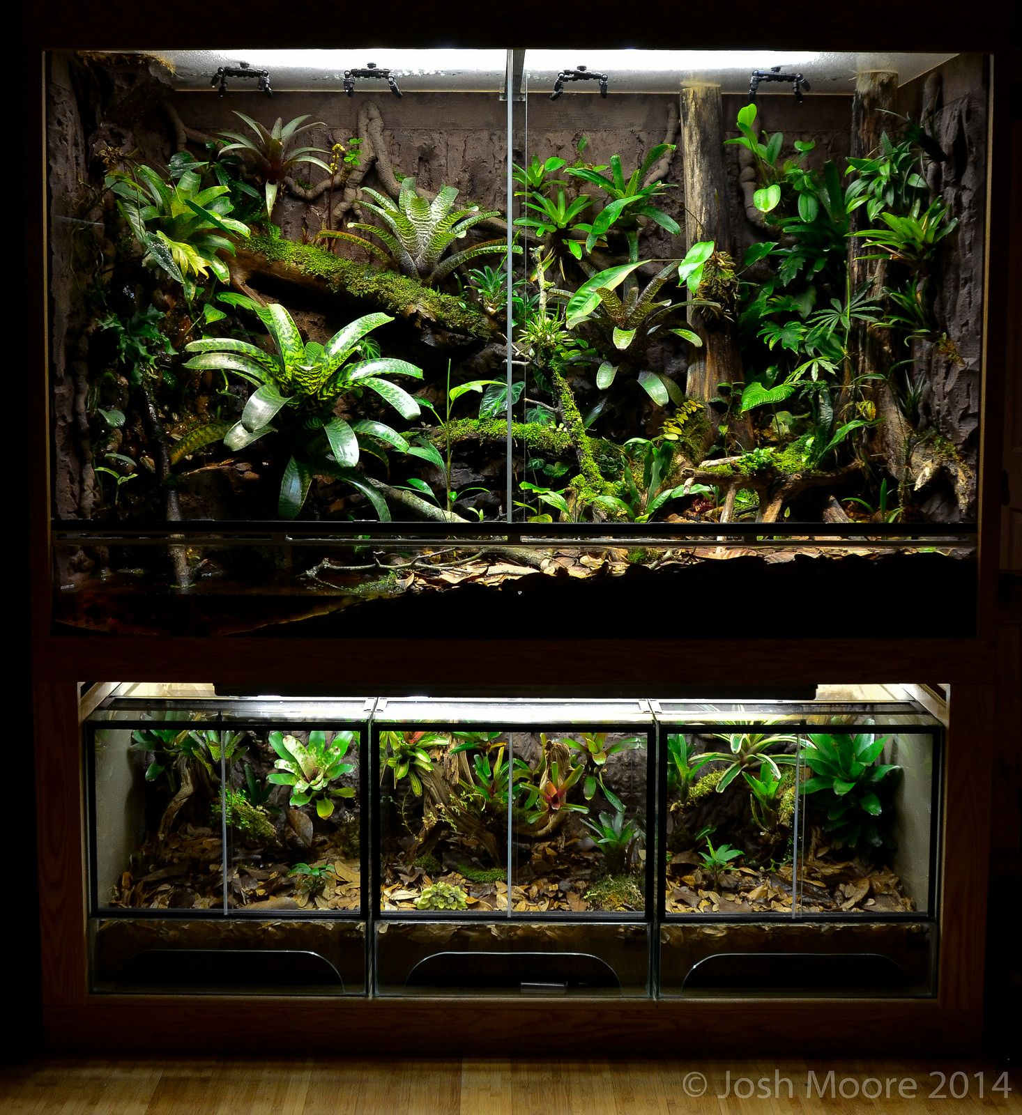 Click the image to open in full size vivarium inspiration