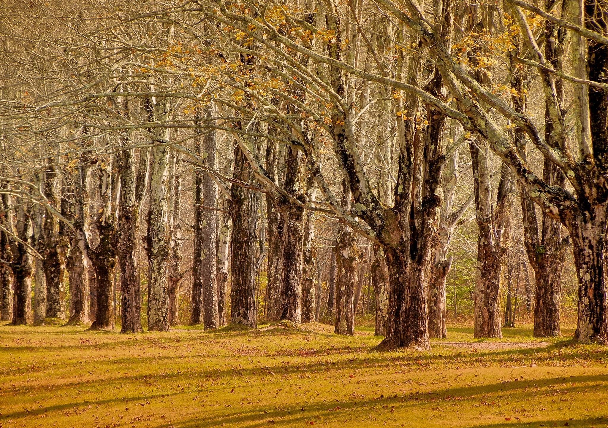Golden trees in the Catskills