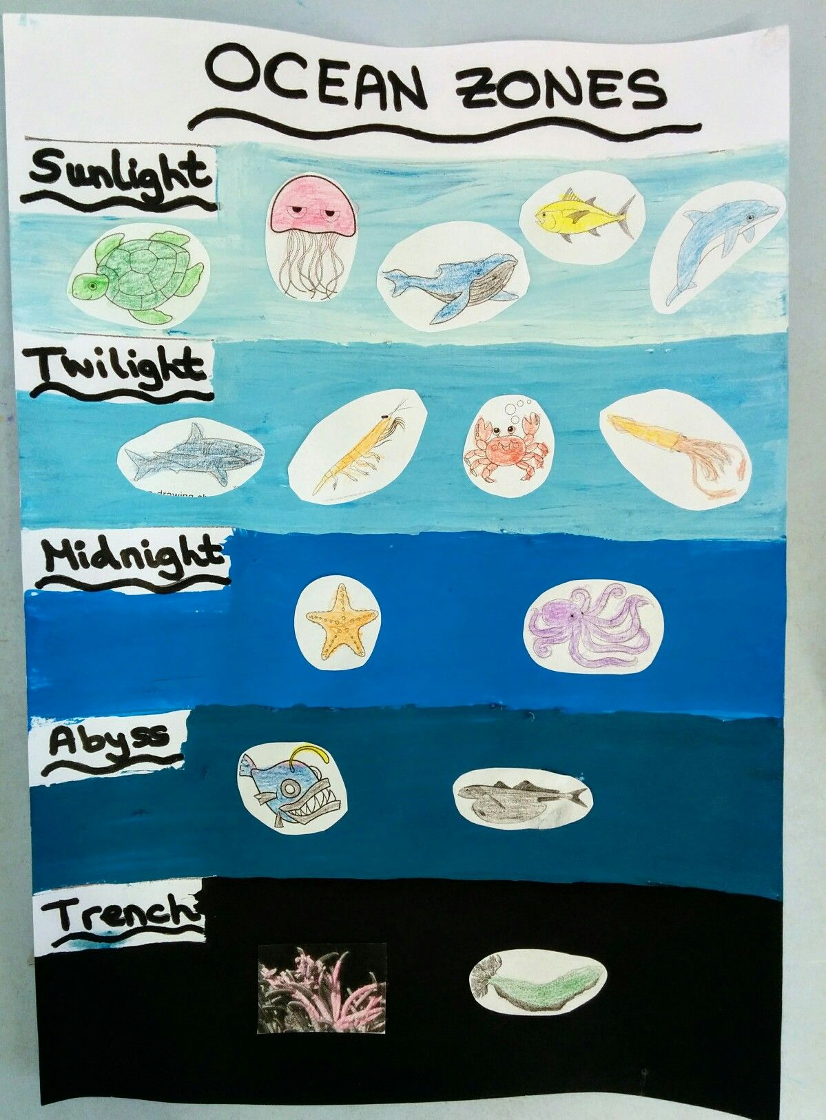 Ocean Zones With Animals That Live On Each Zone