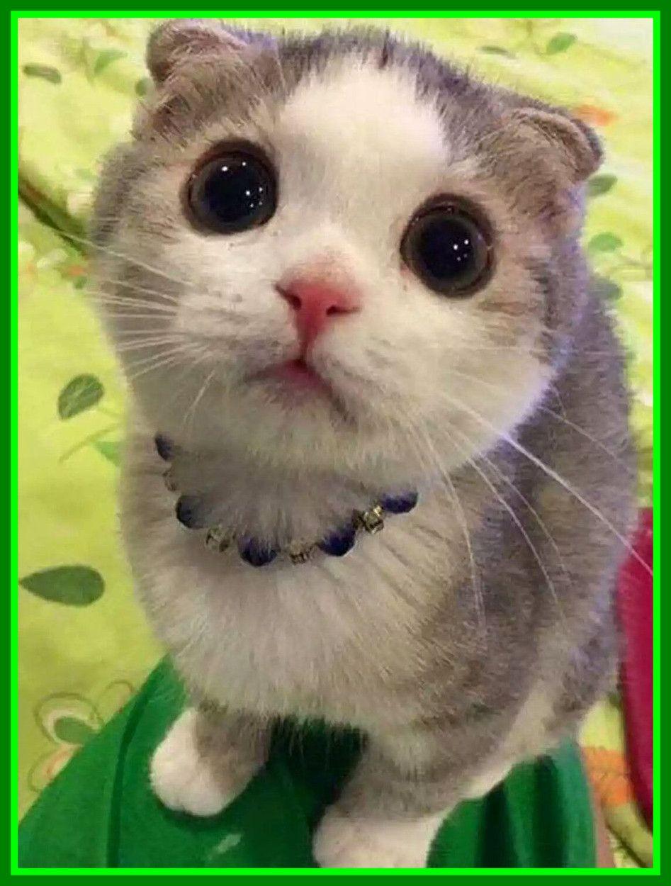 Pin Em Cat S
