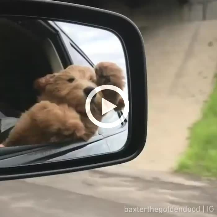 the dog went to the car for the first time
