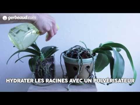 orchid e phalaenopsis trucs et astuces plantes. Black Bedroom Furniture Sets. Home Design Ideas