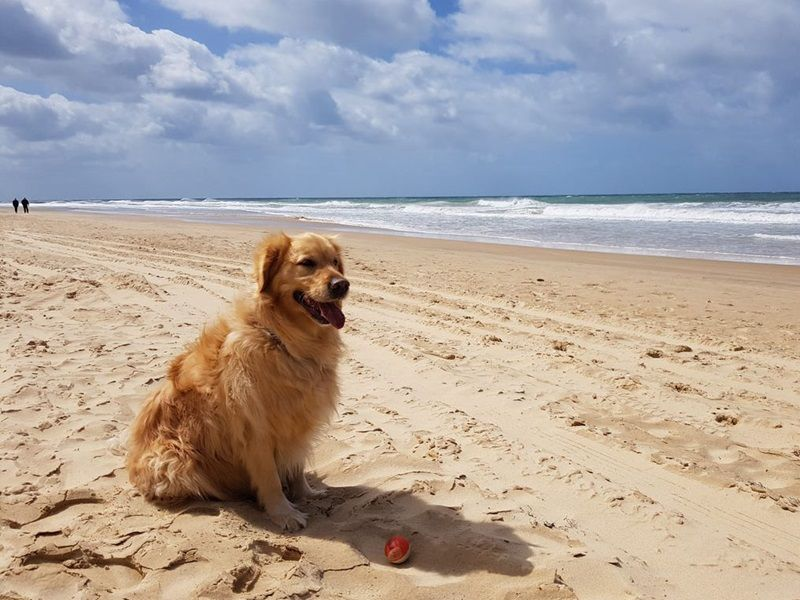 Top Dog Spaces In Gippsland Dog Beach Dogs Dog Travel
