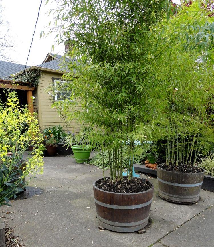 bambus kubel holzfass terrasse sichtschutz einrichten und wohnen pinterest holzfass. Black Bedroom Furniture Sets. Home Design Ideas