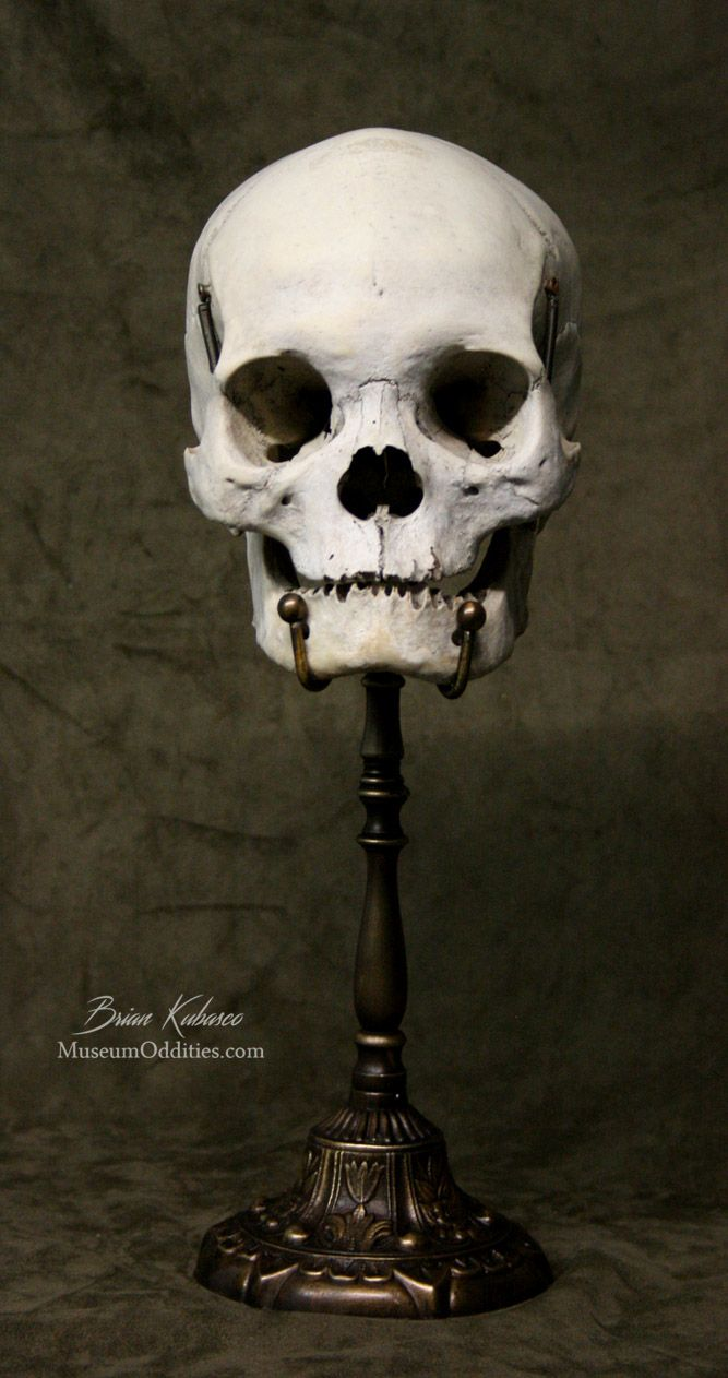 Real Human Skull for sale with custom brass stand at