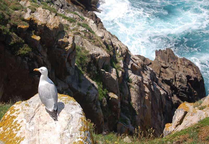 ¡Pajarito disfrutando! La maravillosa isla de Ons, un paraiso por descubrir. Echad un vistazo a las islas Atlánticas con nuestro chollo vacaciones especial: 3 días y 2 noches en el Hotel Oca Vermar 3* (Sanxenxo-Galicia) con 2 desayunos + detalle de bienvenida (bombones) + 1 billete de barco a la Isla de Ons (Parque Nacional Islas Atlánticas) + Picnic tradicional gallego para la excursión a la Isla de Ons + parquing (exterior). #buscounchollo #chollo  #viaje #vacaciones #galicia #islaons