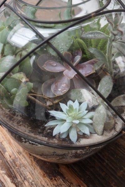 Le terrarium DIY