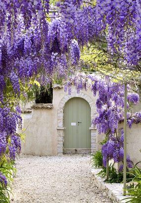 Glycine sur une arche glycine wisteria pinterest glycine clematite et vigoureux - Arche plante grimpante ...