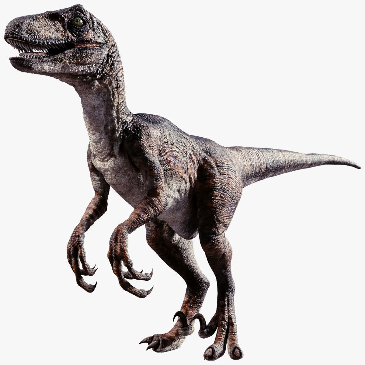 Raptor Dinosaur 3d Obj Raptor Dinosaur Dinosaur Pictures Dinosaur