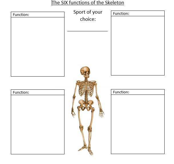 GCSE PE AQA 2016 Functions of the Skeleton | Gcse pe, Gcse ...