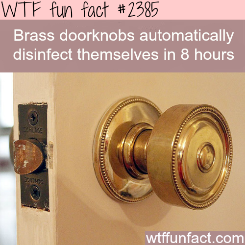 Brass Doorknobs Disinfect Themselves Fun Facts Wtf Fun Facts Fun Health Facts