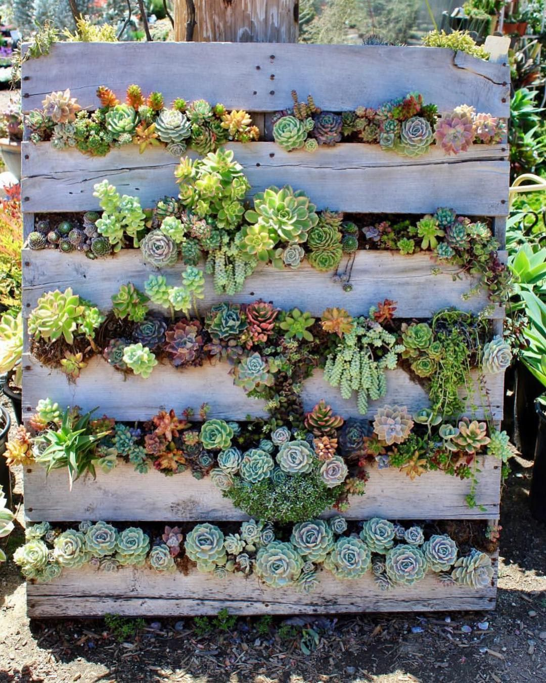 Fairyblooms: Pallet Up Cycled Right! : @gibbiflora