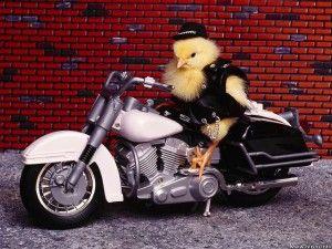 #Easter wrooooom - Quanto la #Pasqua romba