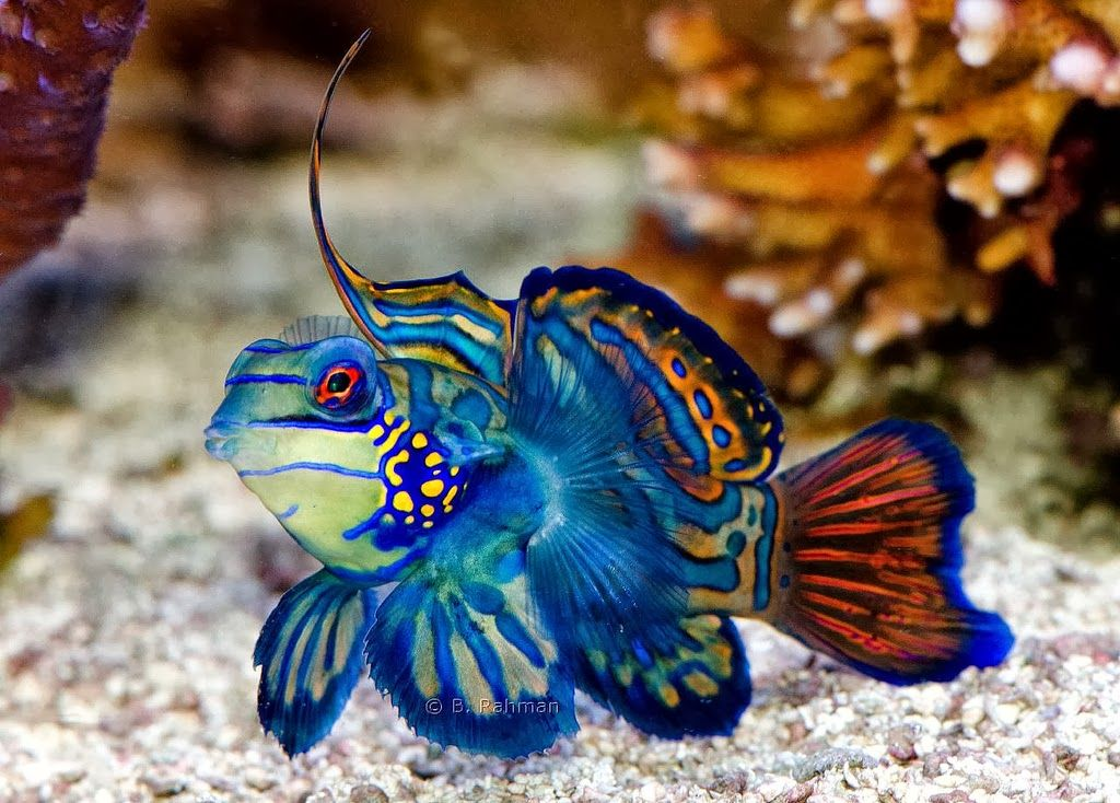 Exotic Freshwater and Saltwater Fishes