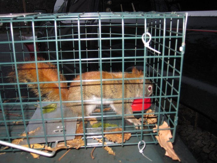 15+ Animal control rochester ny images