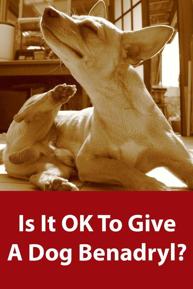 Is benadryl safe for my dog dogs dog benadryl tick