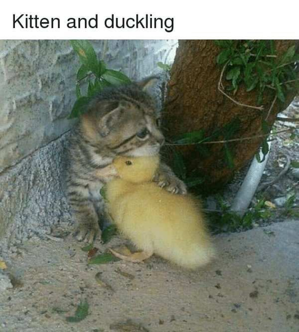 17 Of The Cutest And Most Adorable Kitten Memes To