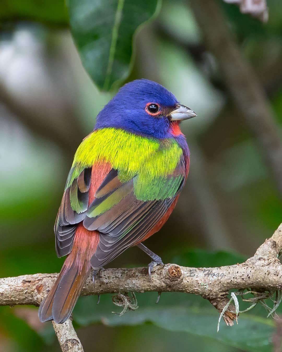 Parece Un Paisaje De Primavera Pajaros Hermosos Aves De Colores Aves Hermosas