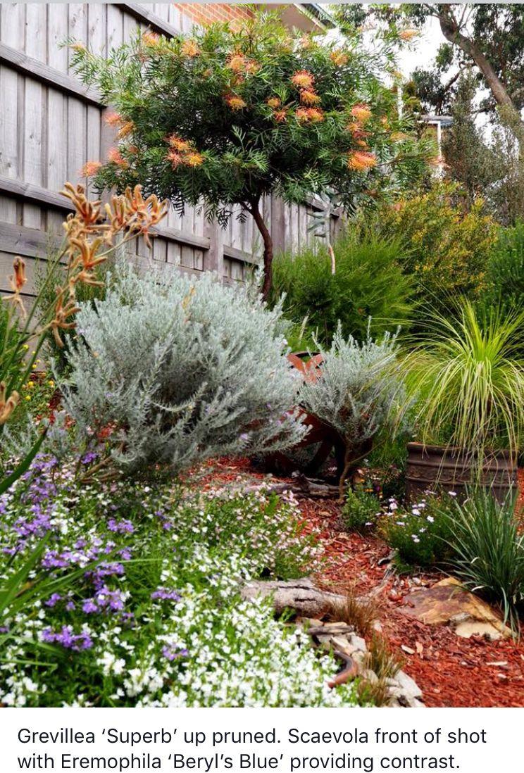 Love the grevillea | Australian native garden, Australian ...
