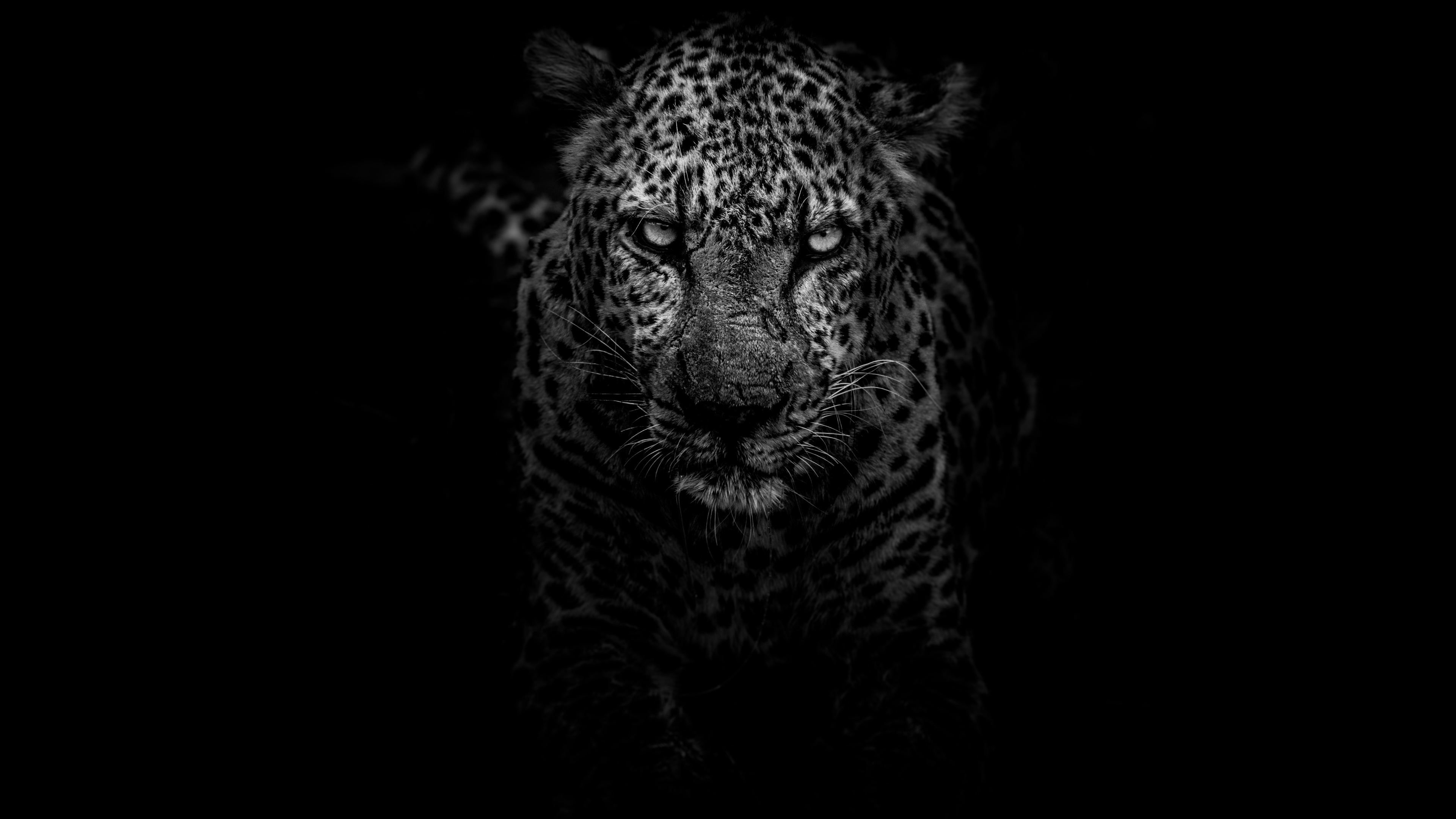Leopard Dark Monochrome 4k Monochrome Wallpapers Leopard Wallpapers Hd Wallpapers Dark Wallpapers Black And Leopard Pictures Animal Wallpaper Jaguar Animal