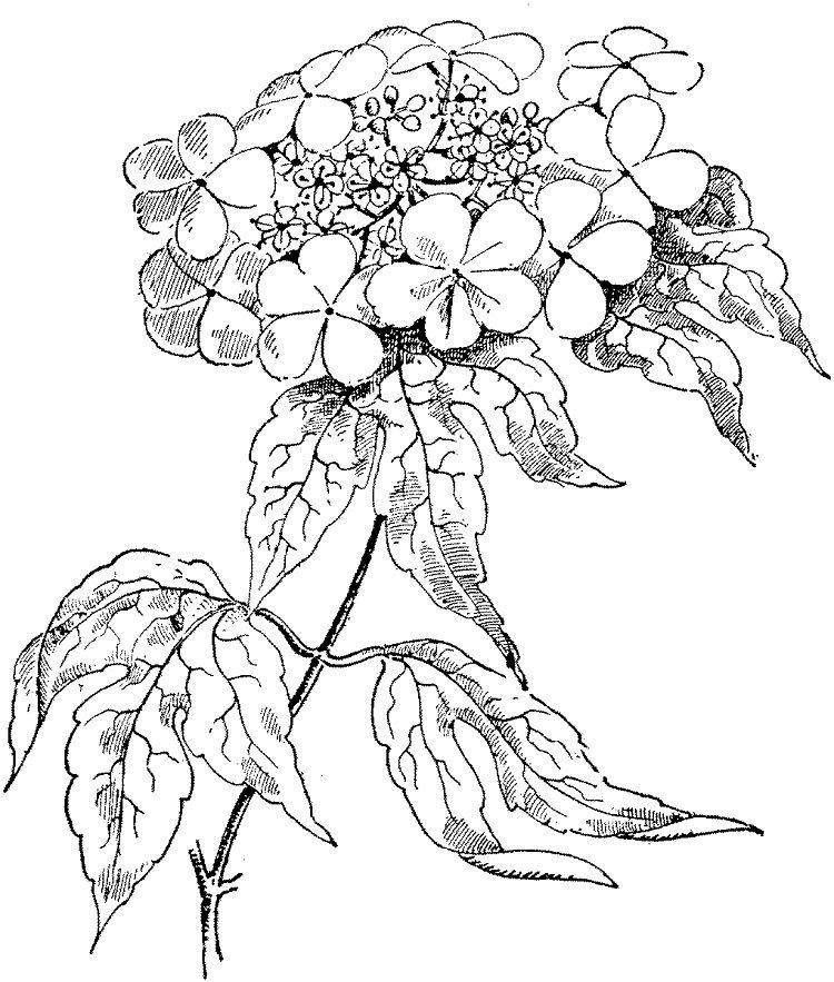 Realistic Rose Coloring Pages. Download or print the image