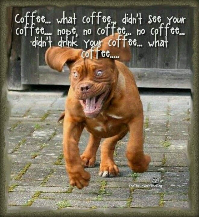 Cute And Funny Dog Posters Funny Animal Quotes Funny Dog Pictures Funny Dogs