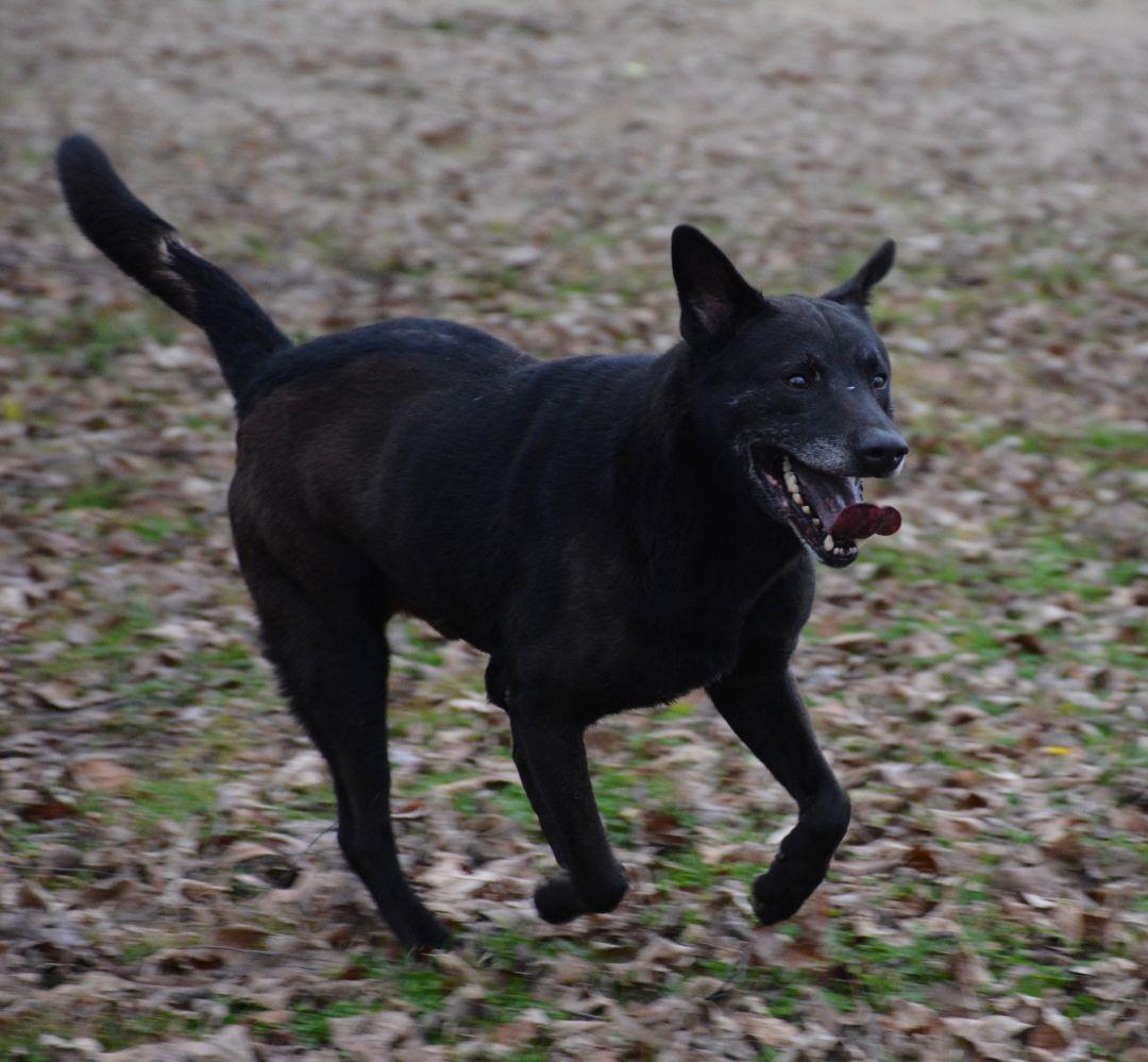 Adopt Oakley On Beautiful Animal Shelter Pet Care Tips Pet