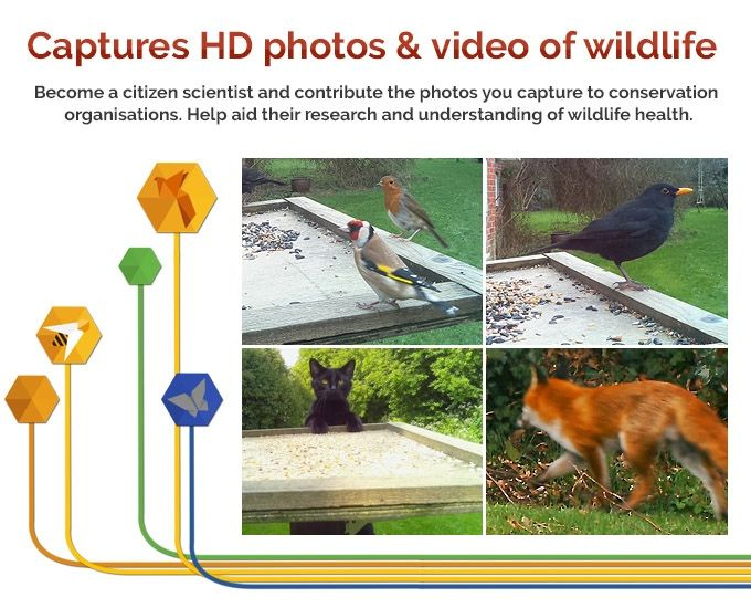 Naturebytes Wildlife Cam Kit: a kit to make a heat-sensitive camera trap. It uses the Model A+ Raspberry Pi and camera board to monitor, count, and conserve wildlife; you can also learn how to code and hack your kit to do much more!